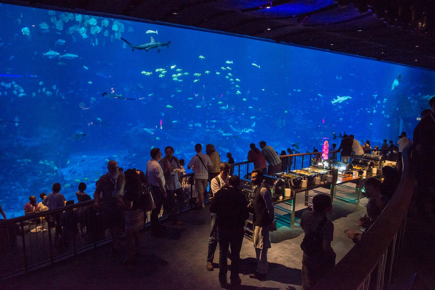 IETF 100 Social event at S.E.A Aquarium, hosted by Cisco.